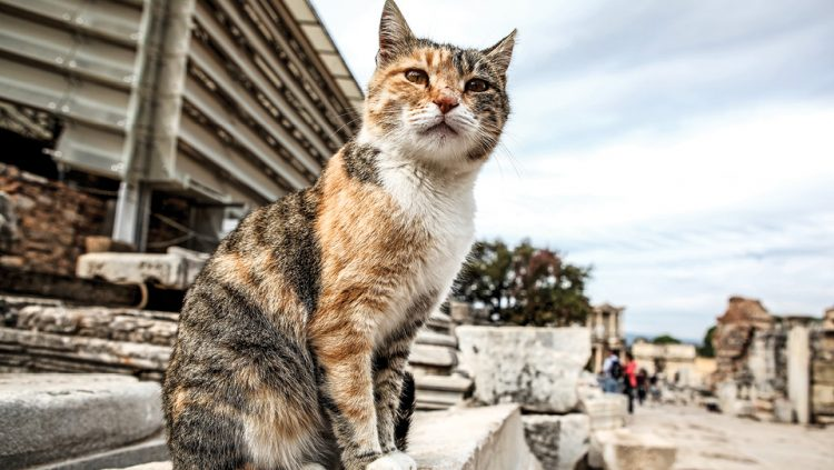 THE CATS OF EPHESUS STEALING A ROLE