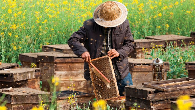 THE ONE WHO EATS HONEY FROM THE REGION WHERE HE LIVES CAN BE PROTECTED FROM ALLERGY