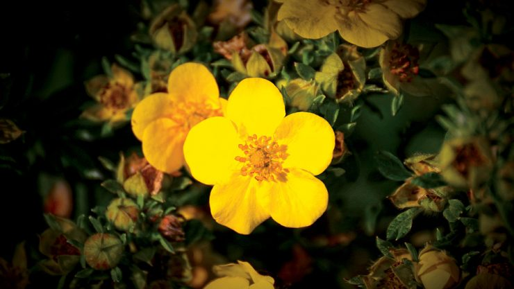 """""""YELLOW FLOWER AT SIDE OF ROOF"""""""