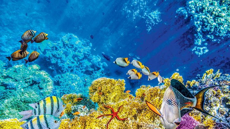 AN UNDERWATER LEGEND: THE GREAT BARRIER REEF