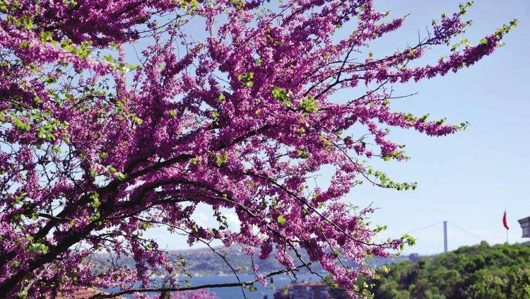 The Most Beautıful Color of A Short Life: Purple