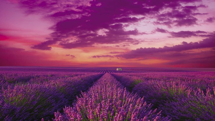Provence and Lavender Fields