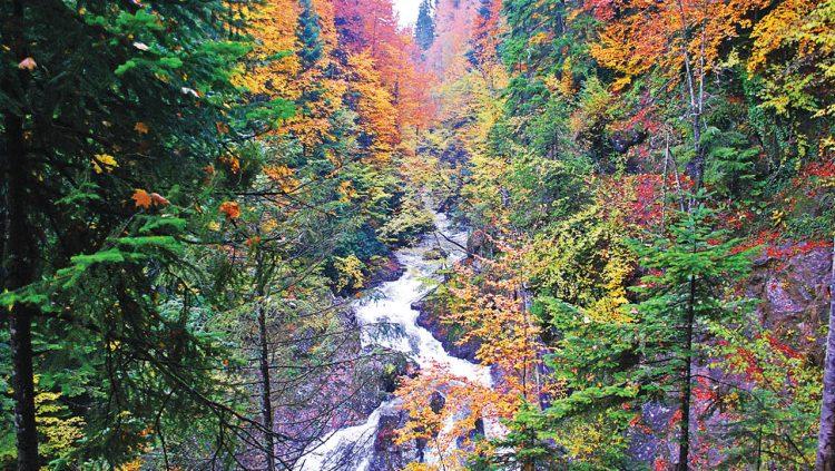 Türkiye'nin Dünyaya Armağanı: Yenice Ormanları