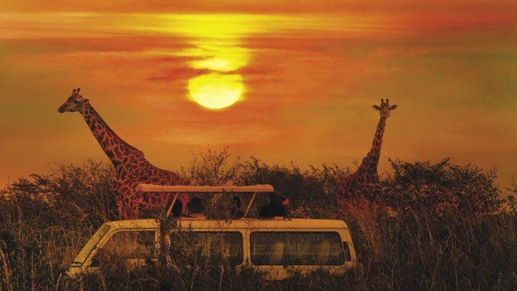 Doğanın Kalbinde Bir Afrika Deneyimi: Safari
